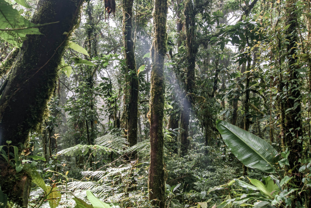 Travel Diary Costa Rica cloud forest Monteverde