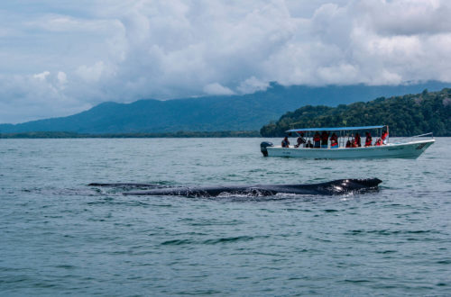 Costa Rica écoresponsable ou greenwashing whale watching à Uvita